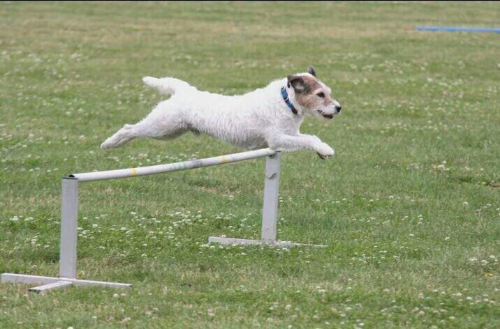 Dogfitness Agility