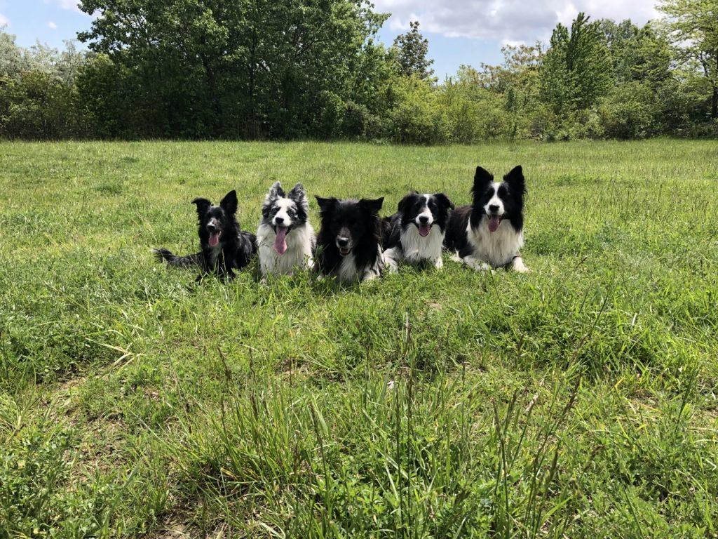 Betreuung der Hunde im Freien