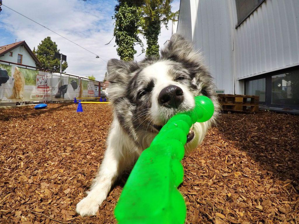 Garten Hundehort